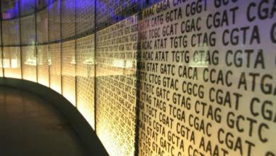 ما هي أهمية وفوائد مشروع الجينوم المصري؟.. أهم المعلومات والتفاصيل